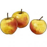 Äpfel_AH